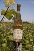 AOC COTEAUX DU VENDOMOIS - Cuvée Jasmine