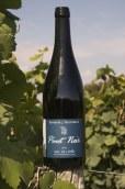 I.G.P. Val de Loire Rouge - Pinot noir